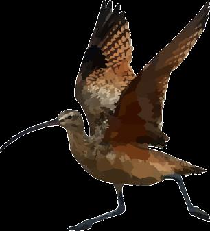 CurlewWings Pixabay