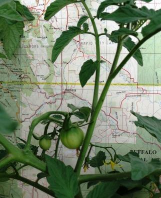 Tomato Map Development