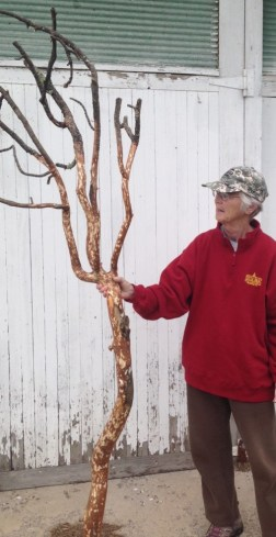Bogus Jim peeled branch