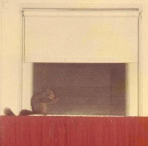 Squirrel 1983