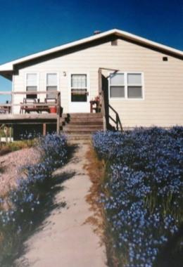 windbreak-house-with-flax