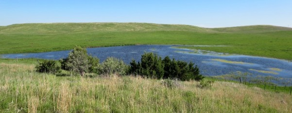 Ranch stock dam in a wet year June 2015
