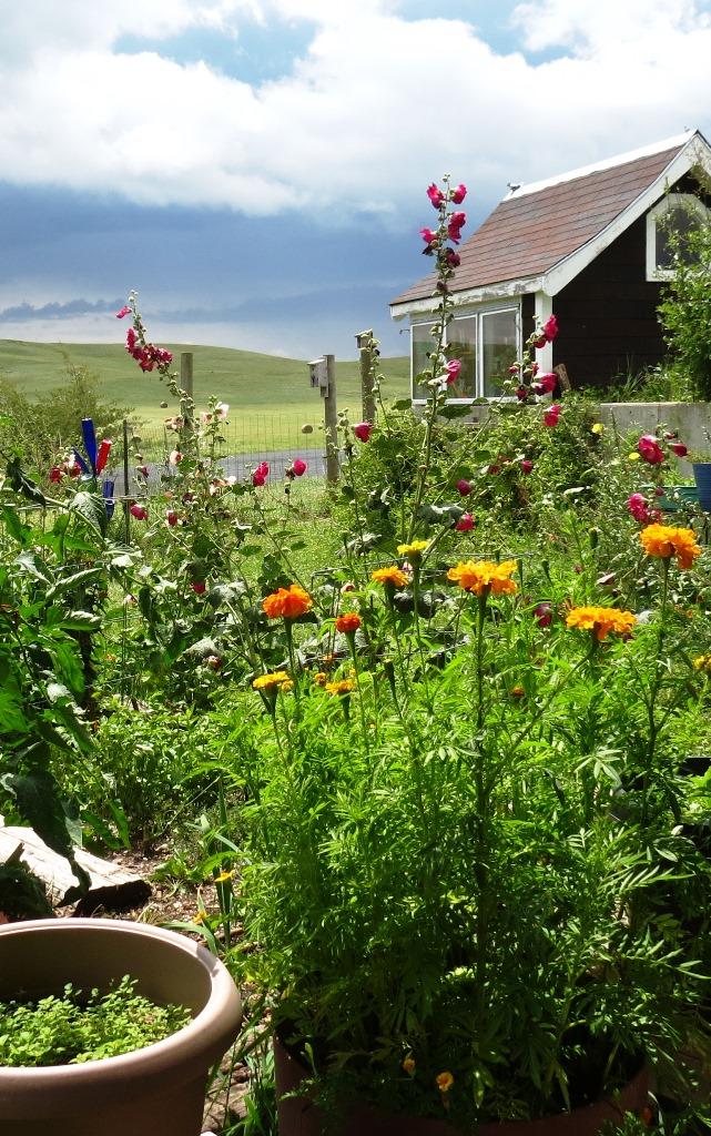 Harvest - garden and greenhouse ecosystem 2018--7-29