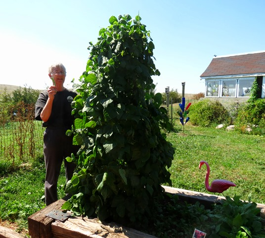 Harvest - Linda with green beans 2018--9-2