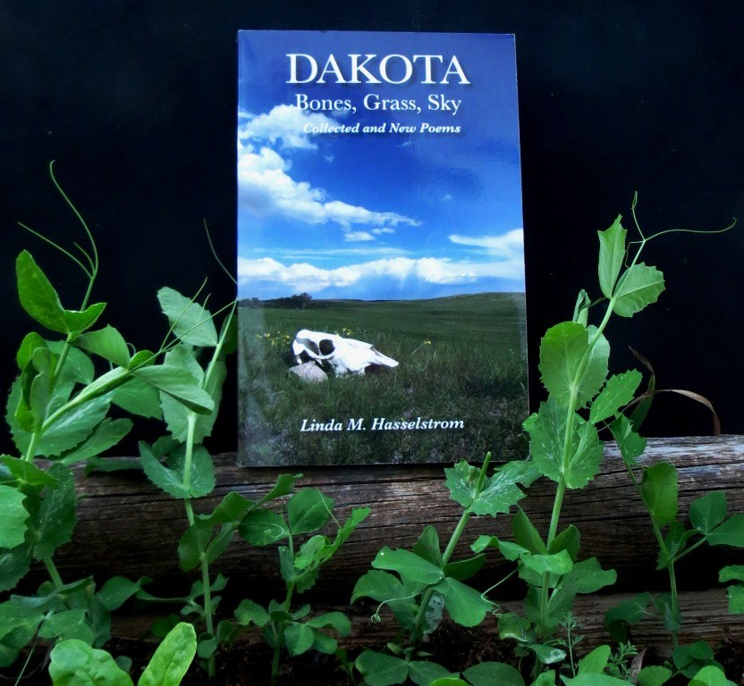 planting-peas-in-dakota-bones-grass-sky.jpg