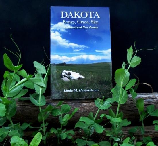 planting-peas-in-dakota-bones-grass-sky.jpg