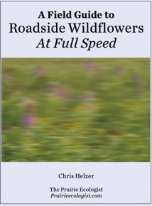 Field Guide to Roadside Wildflowers_edited