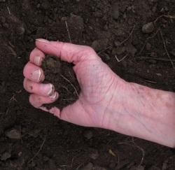 Lammas garden dirt